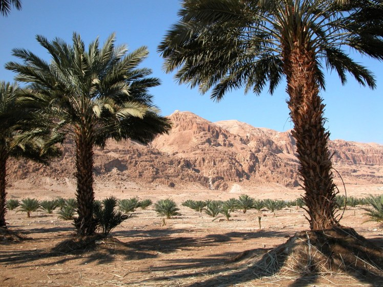 Date Palm Grove Near Dead Sea (Courtesy of Pictorial Library of Bible Lands)