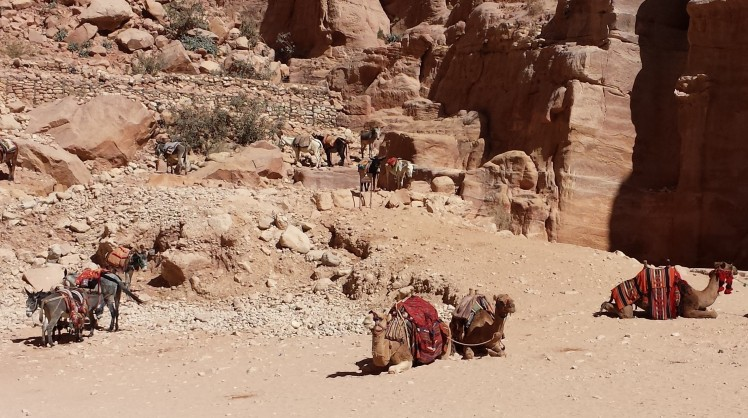 Camels and Horses in Petra