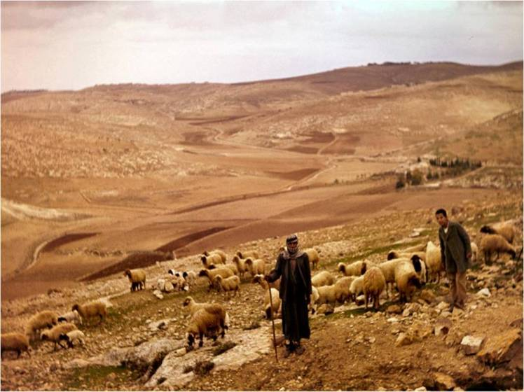 shepherds-in-bethlehem-fields