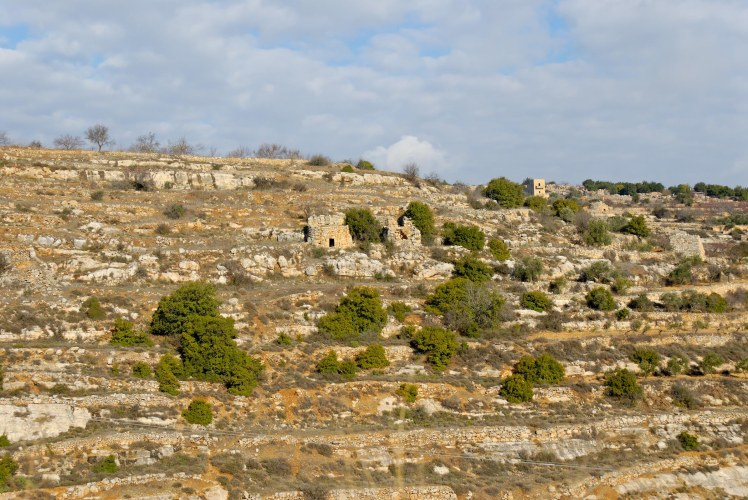 terraced-hillside-near-bethlehem-tb010107217