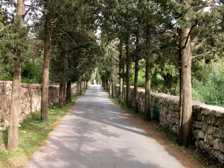 Mount Tabor tree lined entrance road, tb032904204